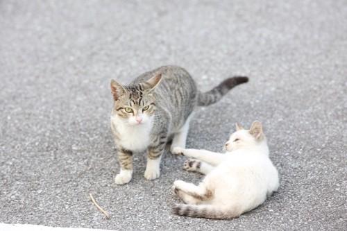 2匹の若い猫