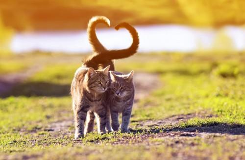 仲の良い猫二匹