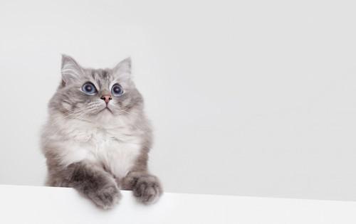 手をかけて何かを見つめる猫
