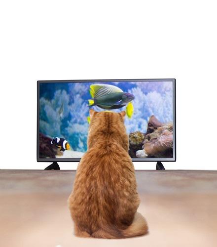 ドラマを見ている猫