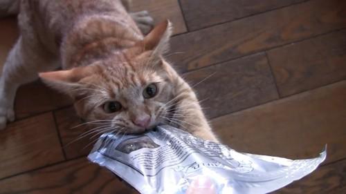 おやつにしがみついて離さない猫