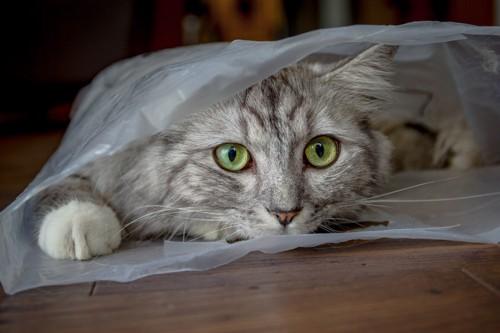 ビニールの中から覗いている猫