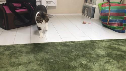 ねずみにのおもちゃの横に立つ猫