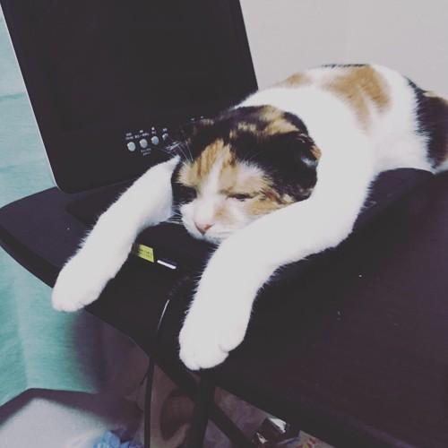 ポータブルテレビの上でぬくぬくする猫