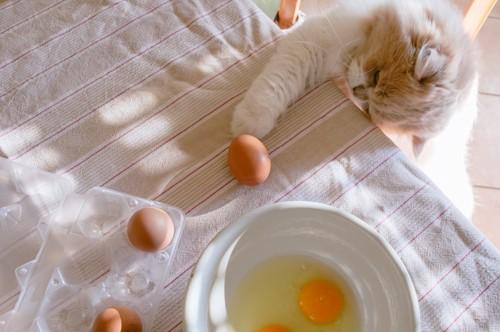 クッキングする猫