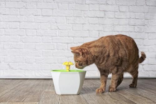 給水器で水を飲む猫