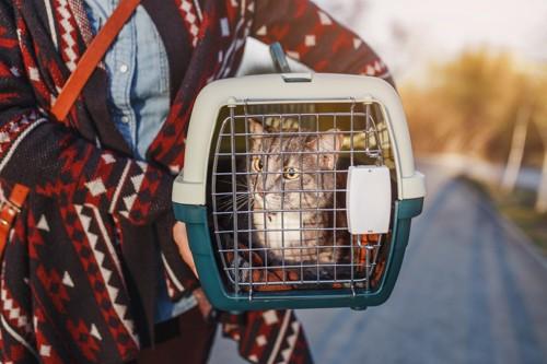 キャリーバッグに入った猫を抱える人