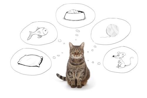 たくさんのことを考えている猫