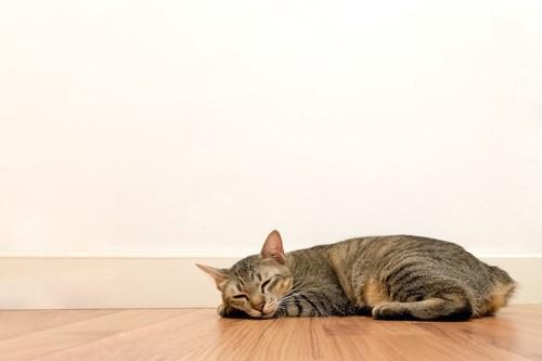 フローリングの上で眠る猫