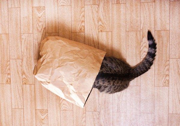 紙袋に顔を突っ込む猫