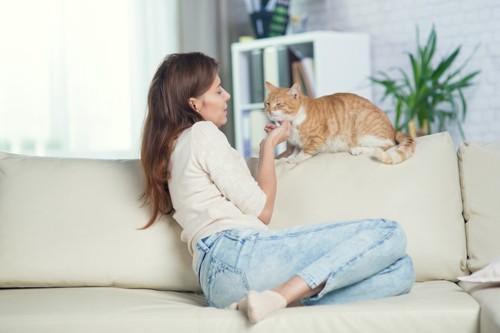 ソファーから猫に話しかける女性