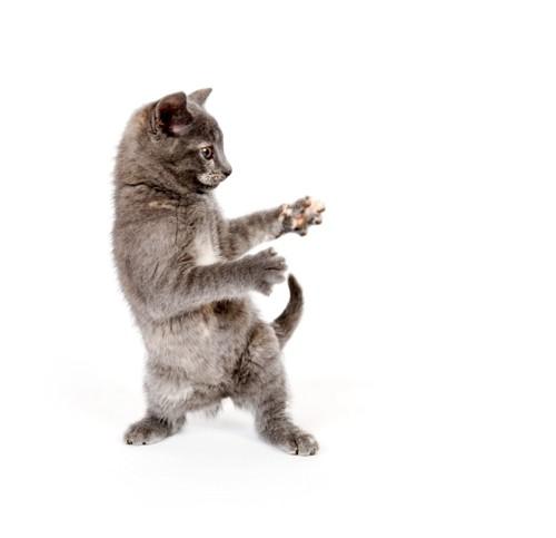 ダンスする猫