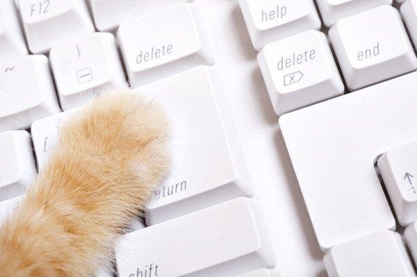 33872474 キーボードと猫の足の写真