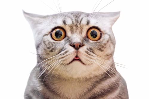 ドン引きする猫