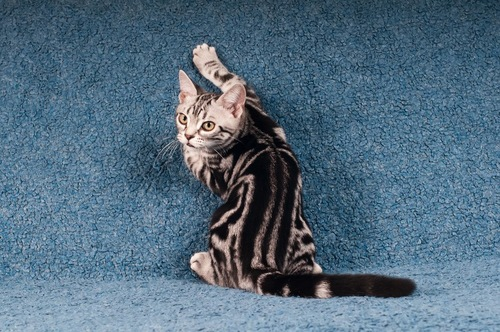 振り返る猫