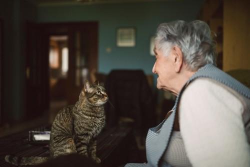 高齢の女性を見つめる猫