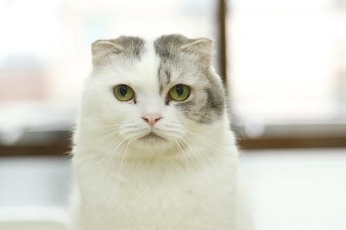 じっと見つめて訴える猫