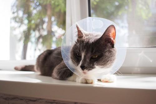 窓辺でくつろぐエリザベスカラーをつけた猫