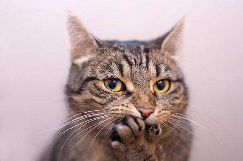 口を前脚で押さえた猫