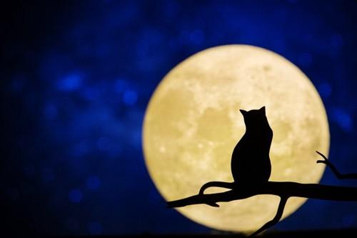 猫の影と大きな月