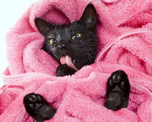 ピンクのタオル中の猫