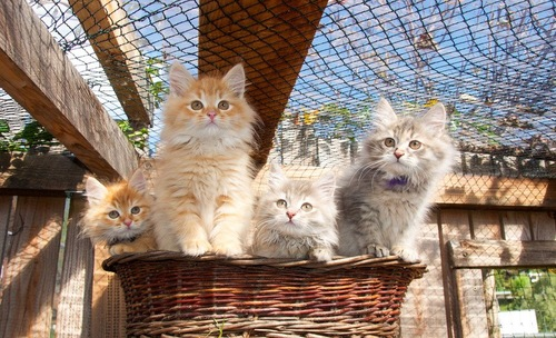 カゴに入ってひなたぼっこする子猫たち