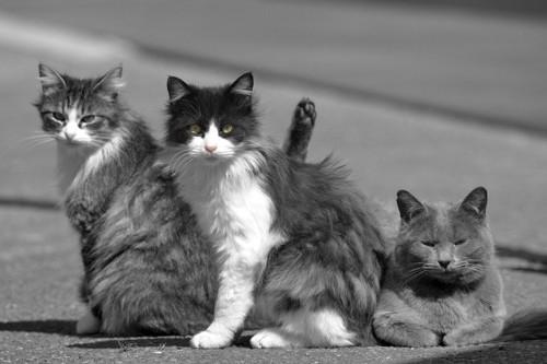 こちら側に気づく猫達