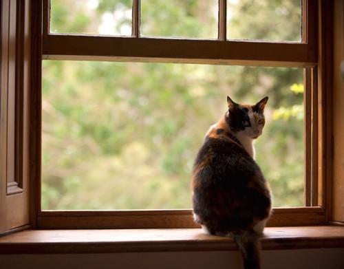 窓辺に座って振り返る猫