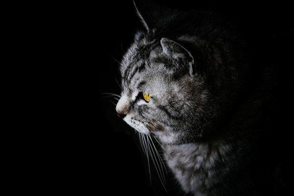 暗い場所にいる猫