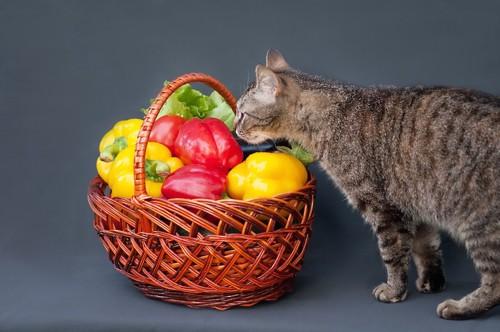 バスケットに入った野菜の匂いを嗅ぐ猫