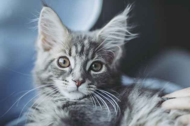 捕獲前の猫