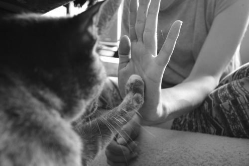 飼い主とタッチする猫