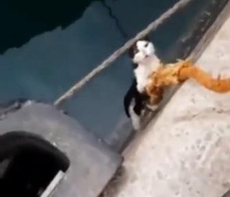 引き上げられる猫