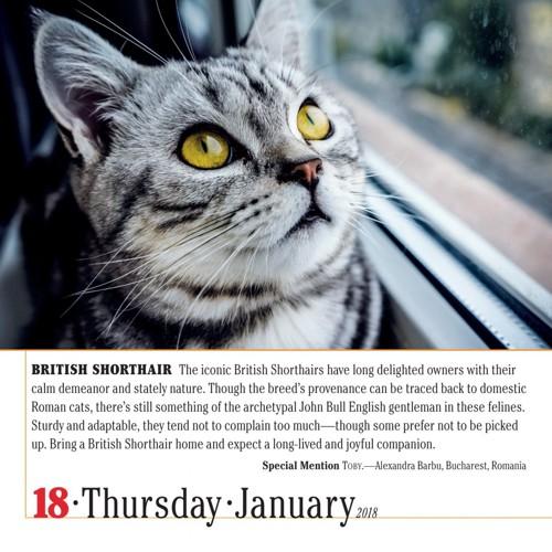 カレンダーの猫1