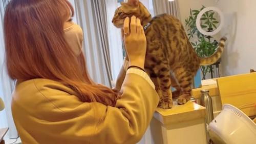 顔をなでられる猫