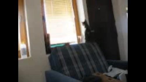 窓の前に猫