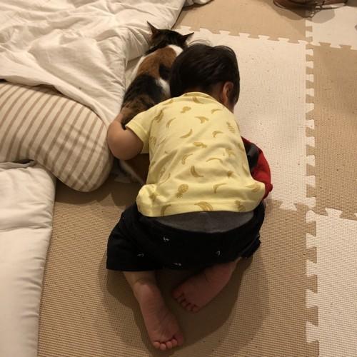 子供が猫を抱きしめてる写真