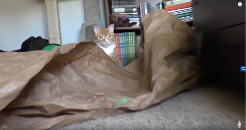 遠巻きに座るチャトラ猫
