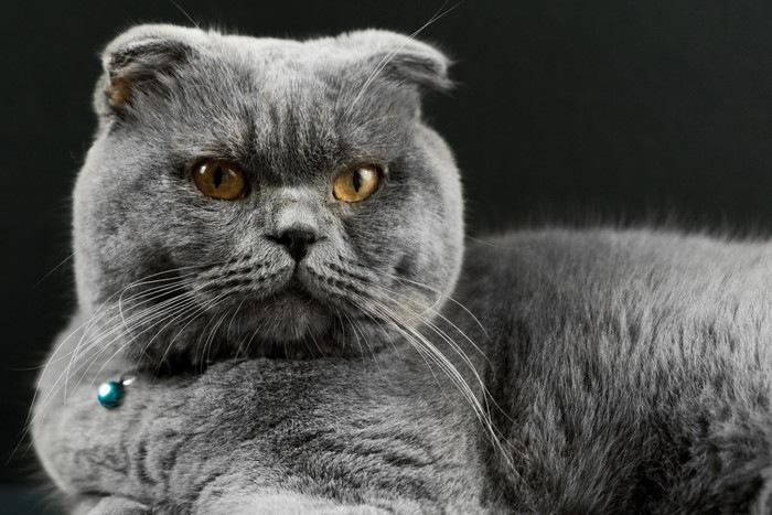ストレスで怒っている猫
