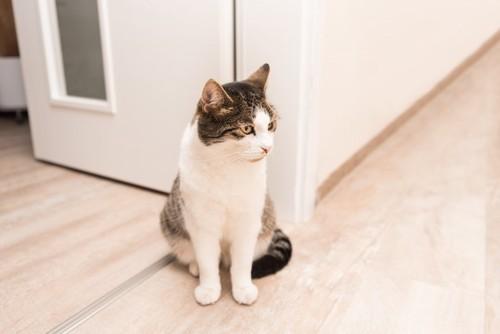 扉の前で飼い主を待つ猫