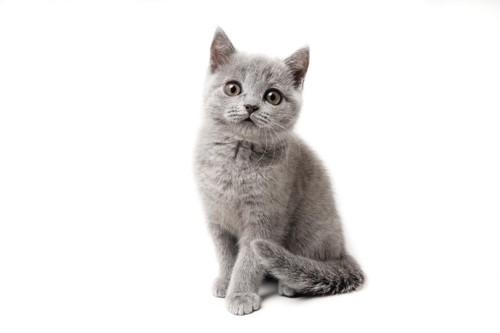 しっぽを足に巻きつけた子猫