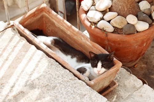 狭い場所で寝る猫