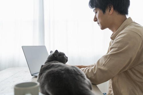 パソコンを見ている飼い主を見つめる猫