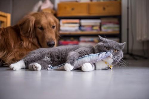 おもちゃで遊ぶ猫を見つめる犬