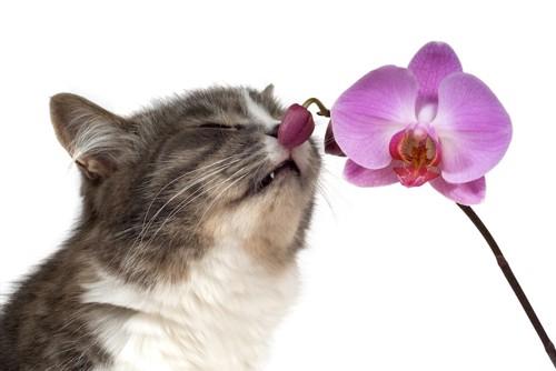 ランの匂いを嗅ぐ猫