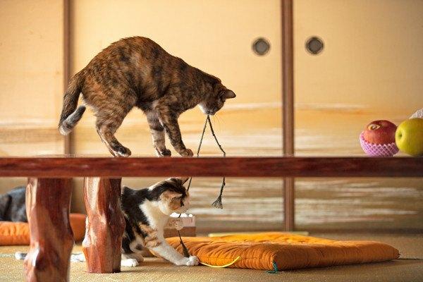 テーブルの上にいる猫と下にいる猫