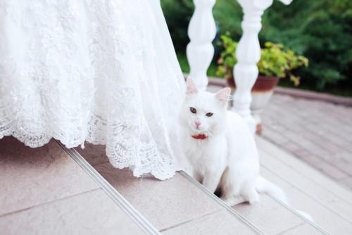 協会の階段と猫