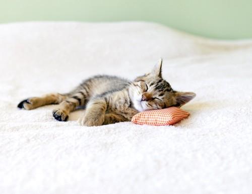 枕をして眠る子猫