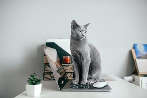 パソコンの上に座っている猫