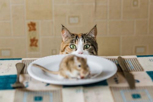 テーブルの上のお皿にのったネズミを見る猫